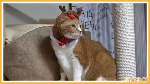 トナカイ帽子の猫