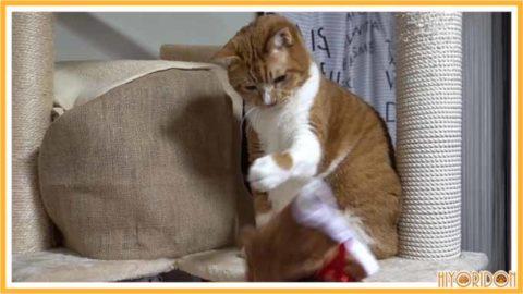 帽子を投げる猫