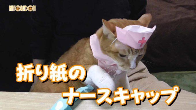 折り紙で作る猫用ナースキャップ