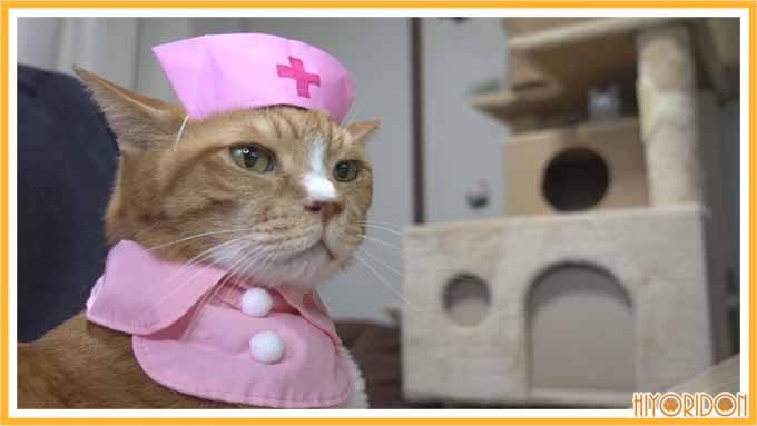 ナースキャップの猫